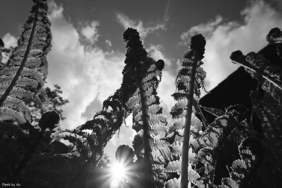 Farn - Ferns
