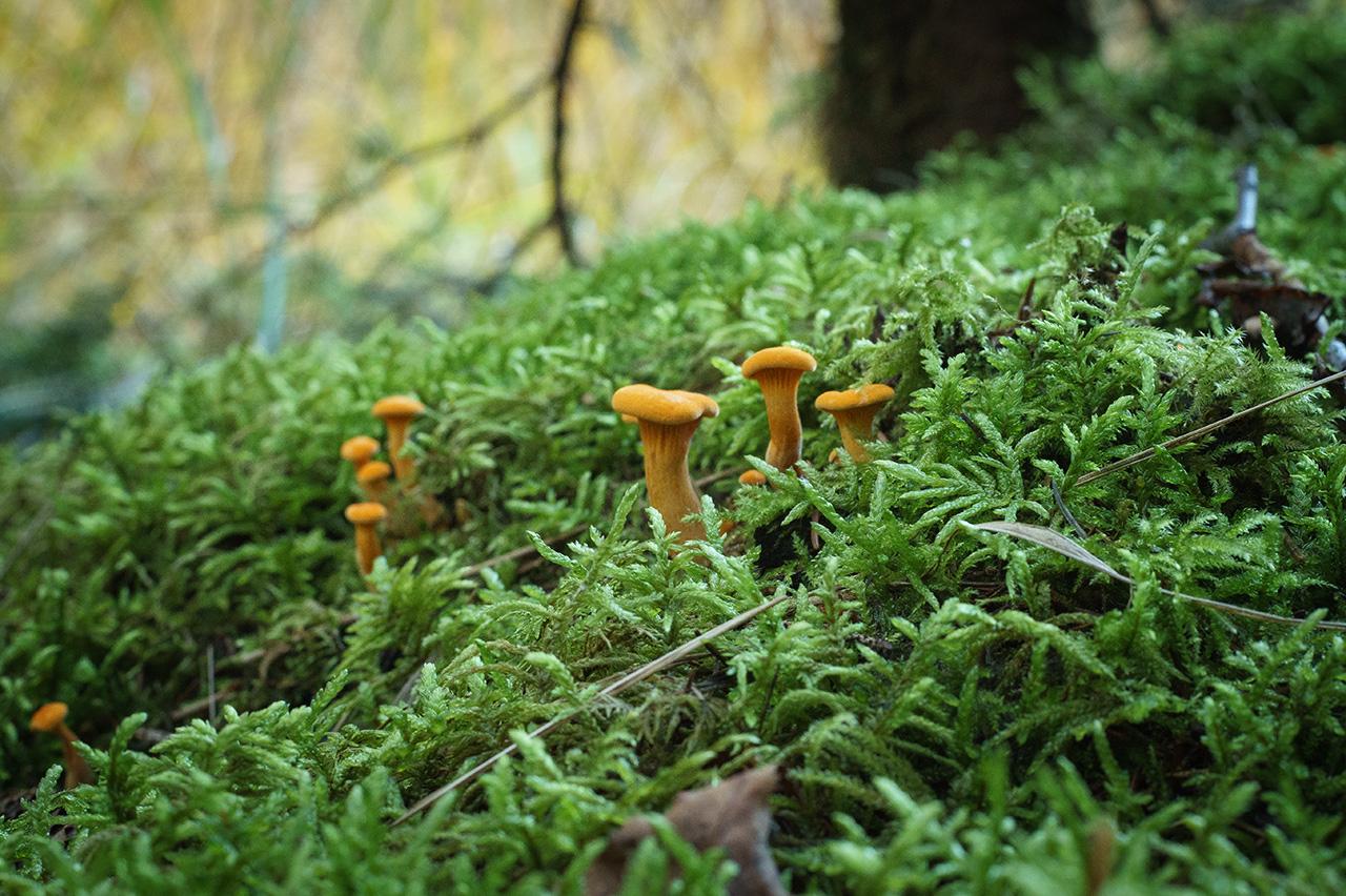 Pilze - 2. Foto der Miniserie